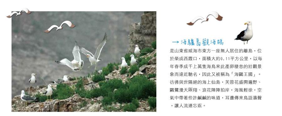 海驢島關海鷗