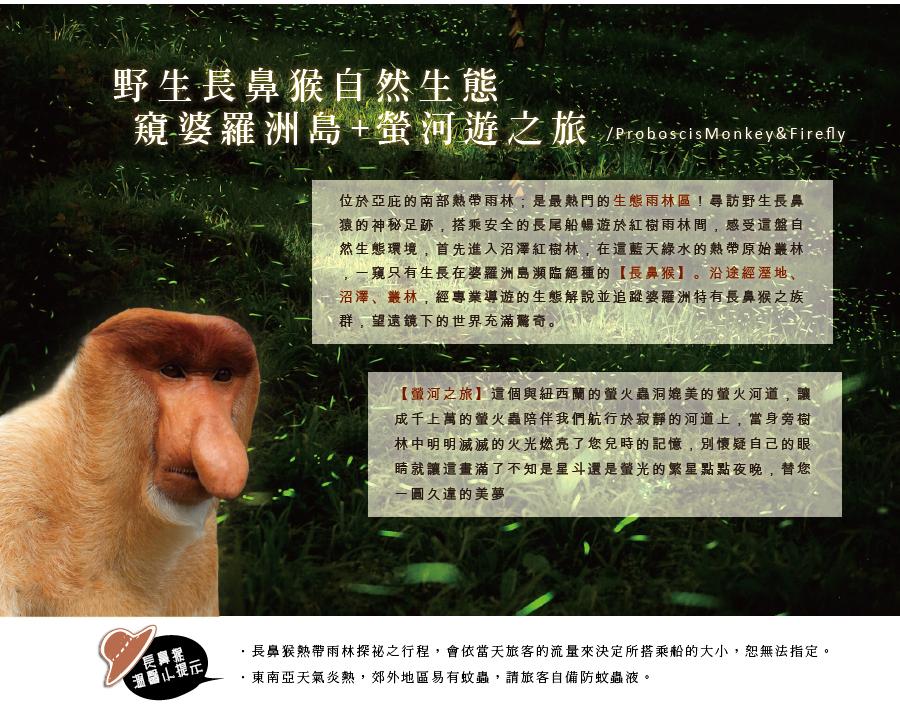 野生長鼻猴 螢河遊之旅